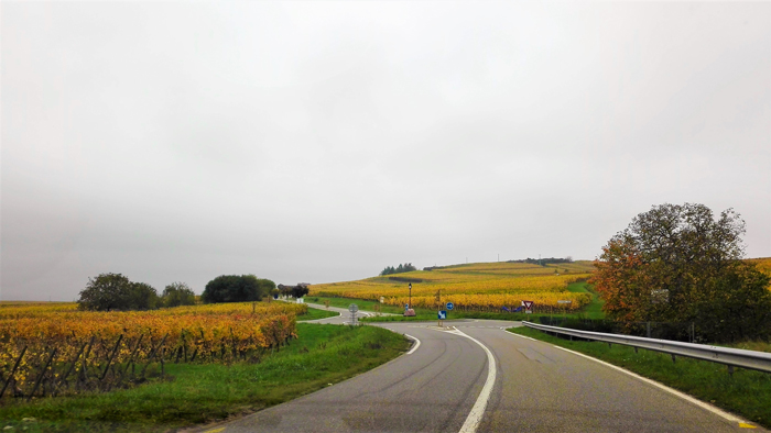 ruta-del-vino-alsaciano-don-viajon-turismo-Bajo-Rin-Gran-Este-Francia
