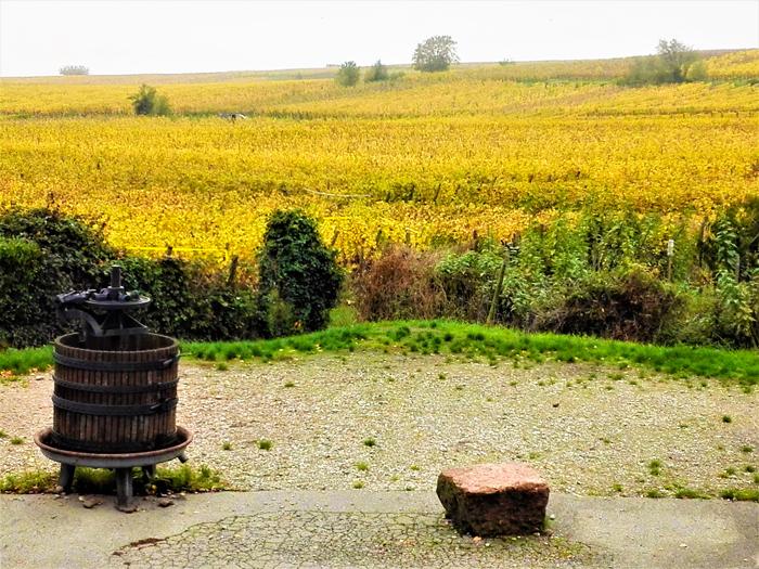 Ruta-del-vino-alsaciano-don-viajon-turismo-gastronomico-recreativo-senderismo-aventura-Alsacia-Gran-Este-Francia