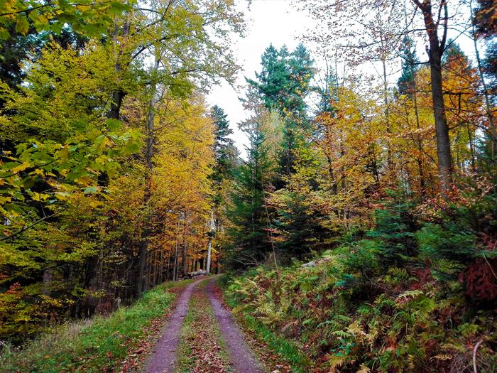 Valle-del-rio-Enz-Pforzheim-don-viajon-turismo-rural-recreativo-naturaleza-rutas-senderismo-Selva-Negra-Alemania