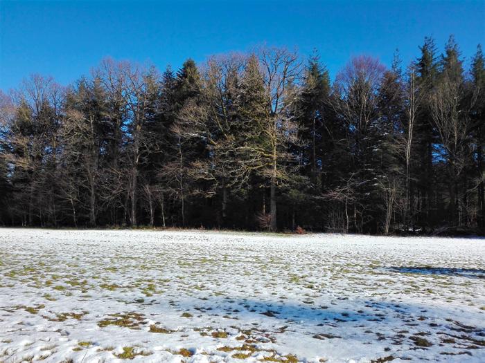invierno-en-la-Selva-Negra-Engelsbrand-don-viajon-turismo-aventura-naturaleza-Alemania