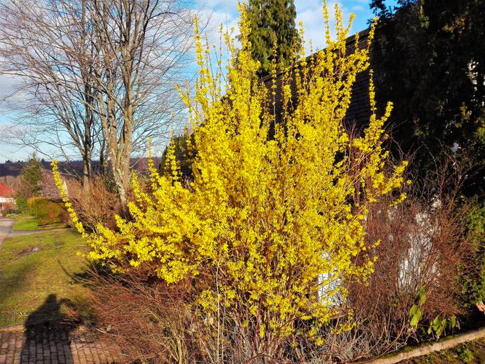 Pforzheim-flor-de-pascua-don-viajon-turismo-aventura-naturaleza-invierno-Alemania