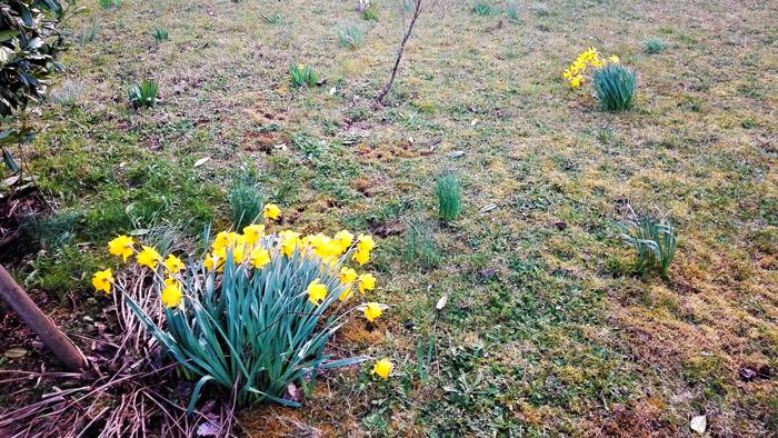 Pforzheim-un-bello-jardin-en-primavera-don-viajon-turismo-sostenible-Baden-Wurttemberg-Alemania