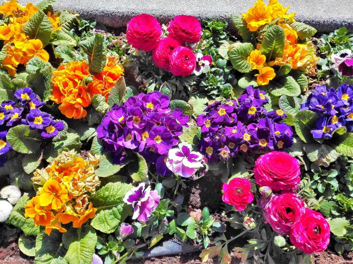 Bad-Rappenau-primavera-jardines-urbanos-don-viajon-turismo-recreativo-senderismo-naturaleza-Heilbronn-Alemania