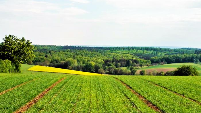 Duerrenbuechig-Walzbachtal-primavera-cultivos-de-canola-don-viajon-turismo-recreativo-rutas-senderismo-Bretten-aventura-naturaleza-Baden-Wurttemberg-Alemania