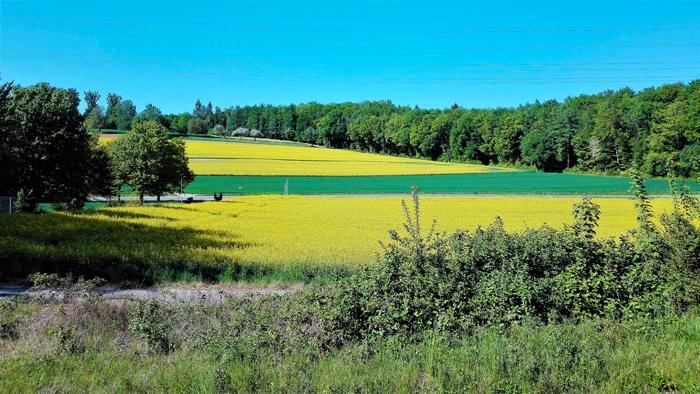 Duerrenbuechig-Walzbachtal-primavera-cultivos-de-colza-don-viajon-turismo-recreativo-rutas-senderismo-distrito-Karlsruhe-aventura-naturaleza-Baden-Wurttemberg-Alemania