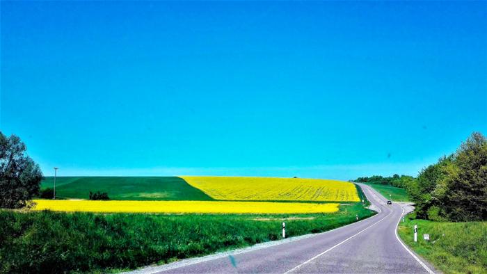 Duerrenbuechig-Walzbachtal-primavera-cultivos-de-raps-don-viajon-turismo-recreativo-rutas-senderismo-Bretten-aventura-naturaleza-Baden-Wurttemberg-Alemania