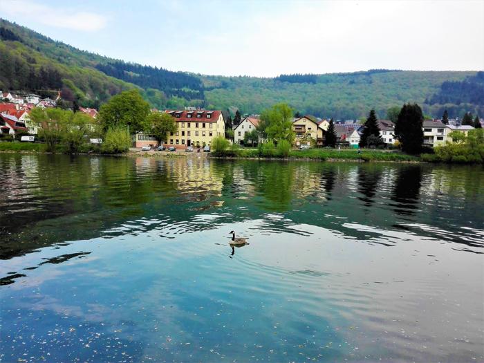 Neckargemuend-don-viajon-turismo-urbano-recreativo-senderismo-rio-Neckar-Baden-Wurttemberg-Alemania