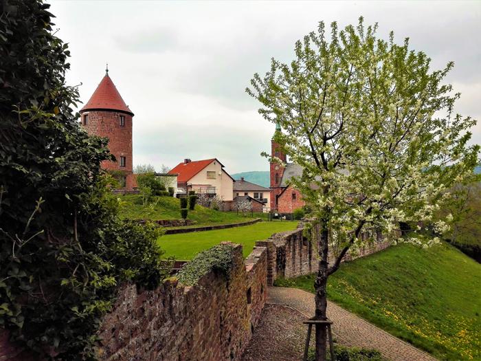 Primavera-en-Dilsberg-don-viajon-turismo-aventura-senderismo-Kraichgau-Baden-Wurttemberg-Alemania